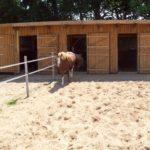 Stall Pferde